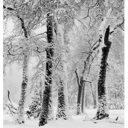 John Sexton - BLACK OAKS, SNOWSTORM, YOSEMITE VALLEY LIMITED EDITION PRINT (framed)