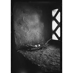 楊延康 (Yang Yankang)作品 -03寺庙窗台上的野鸽蛋 西藏2011