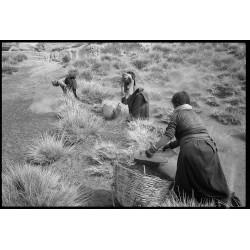 楊延康 (Yang Yankang)作品 - 12拾羊糞的婦女2005