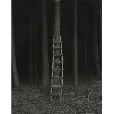 The Scale - Jean Claude Mougin (France)