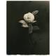 Small Things In Silence Yamamoto Masao