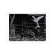 Eikoh Hosoe: Masters Of Photography Aperture (Signed Book) 細江英公